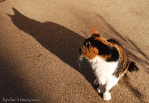 猫の影_b0253205_04183811.jpg