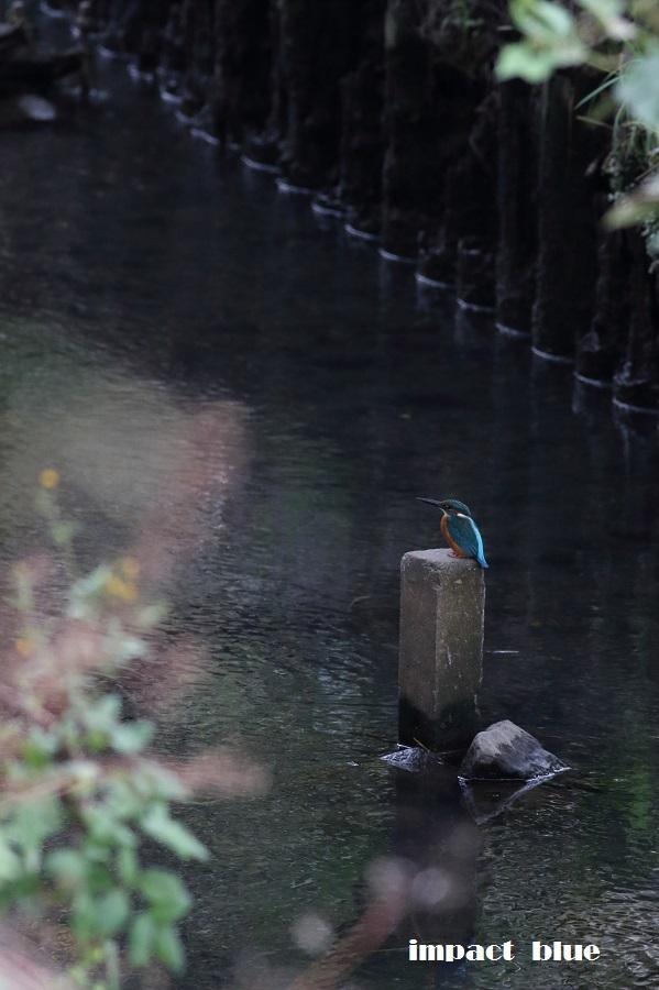 初冬の素敵な川(#^.^#)  ~2~_a0355908_12533990.jpg