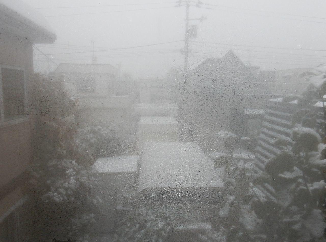 夜が明けたら雪国だった_c0025115_21092678.jpg