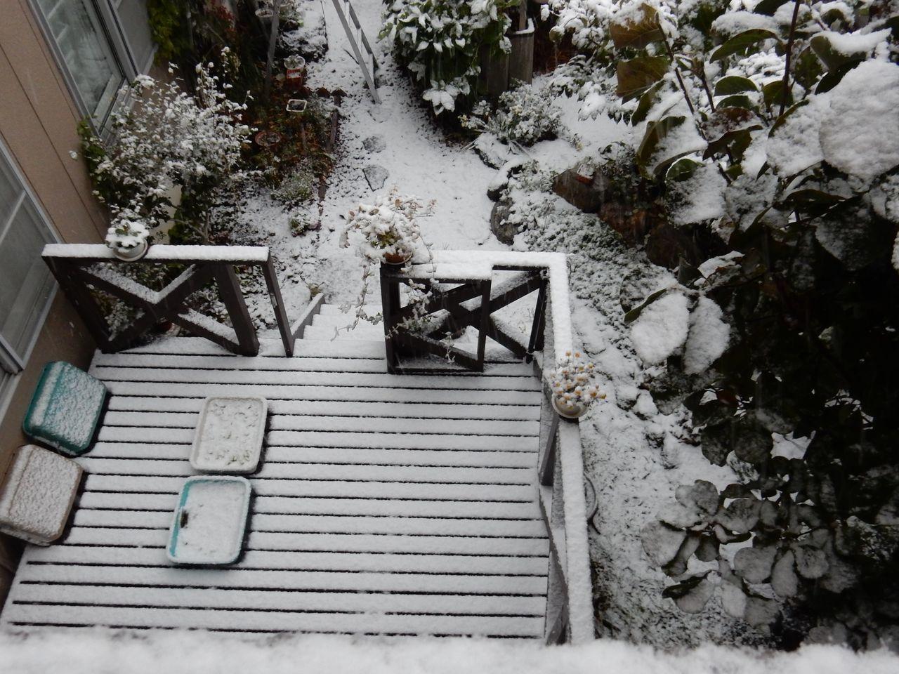 夜が明けたら雪国だった_c0025115_21094261.jpg