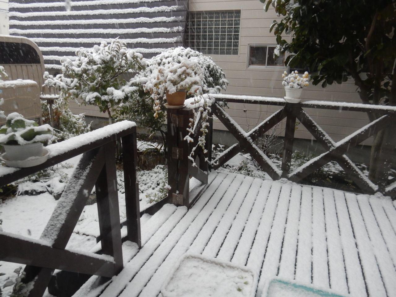 夜が明けたら雪国だった_c0025115_21095120.jpg