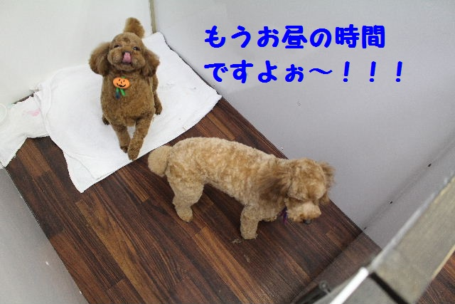 いっぱ~い!!_b0130018_6392685.jpg