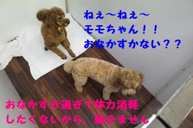 いっぱ~い!!_b0130018_639357.jpg