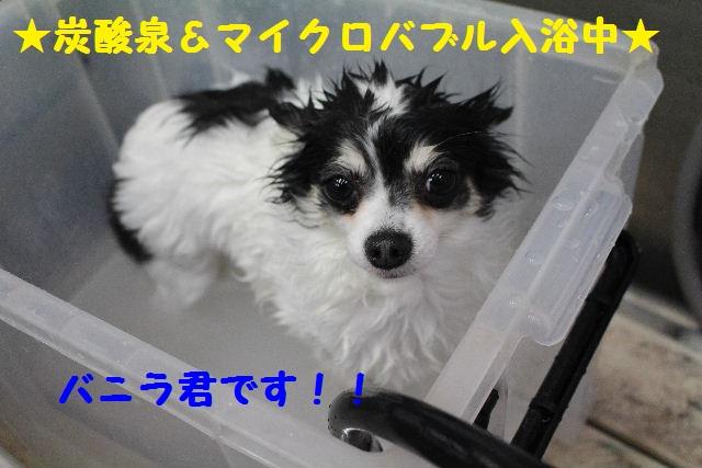 いっぱ~い!!_b0130018_6403224.jpg