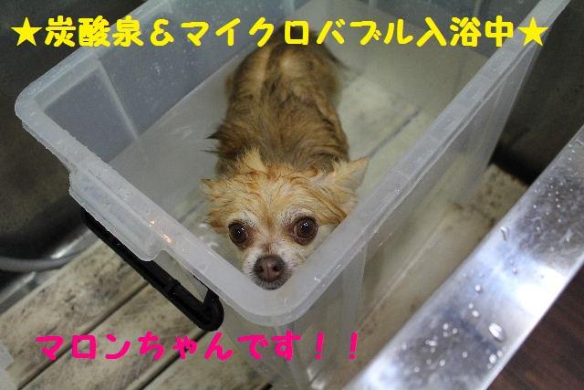 いっぱ~い!!_b0130018_6411787.jpg