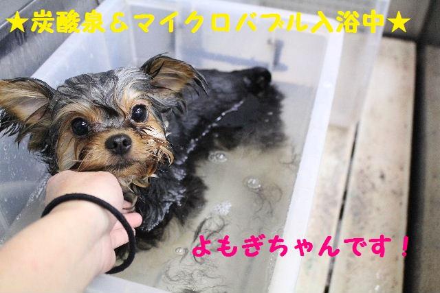 いっぱ~い!!_b0130018_643359.jpg