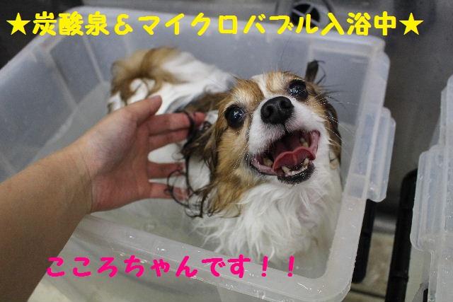 いっぱ~い!!_b0130018_6443046.jpg