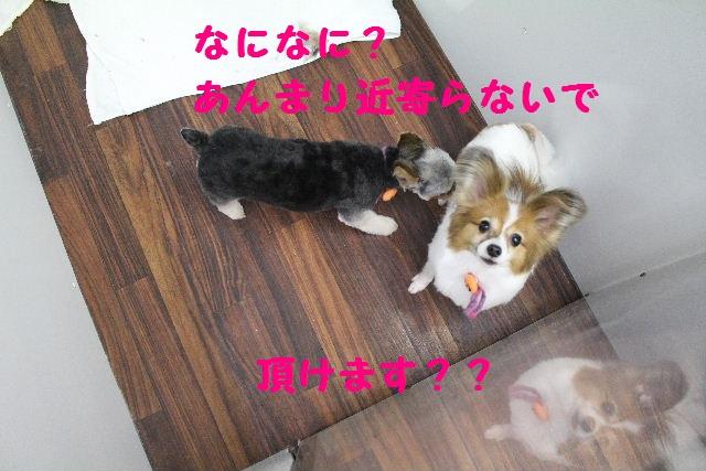 いっぱ~い!!_b0130018_6455466.jpg
