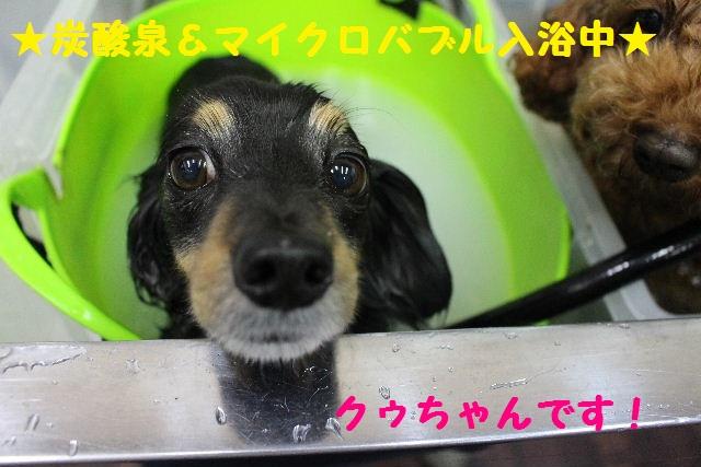 いっぱ~い!!_b0130018_64732.jpg