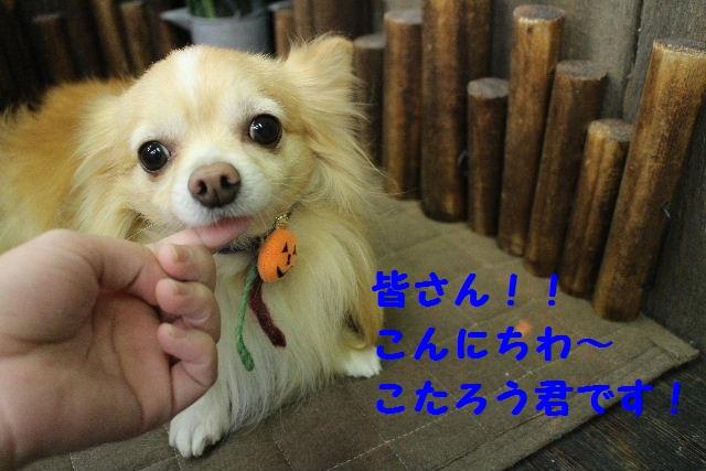 いっぱ~い!!_b0130018_652221.jpg