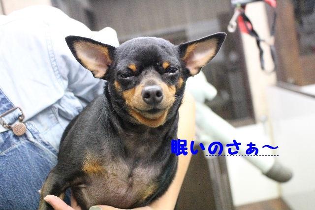 いっぱ~い!!_b0130018_656374.jpg
