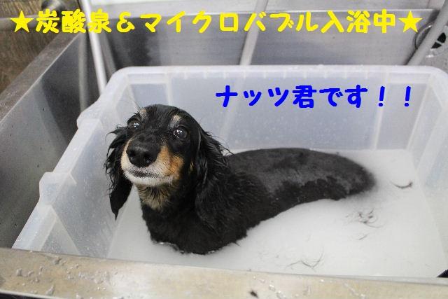 いっぱ~い!!_b0130018_6571595.jpg