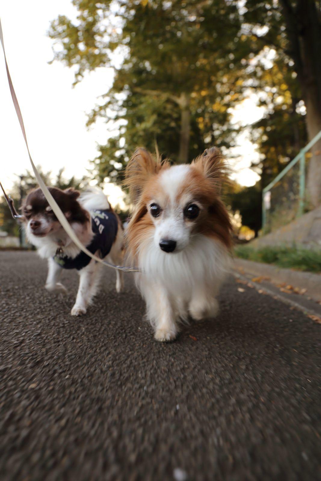 秋空散歩_a0027126_23042134.jpg