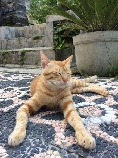 猫さんはあくびでお見送り_a0120328_16325332.jpg