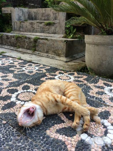 猫さんはあくびでお見送り_a0120328_16333957.jpg