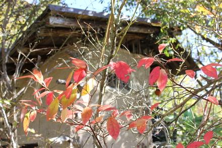 秋の風景 おやすみな祭_d0249047_10171933.jpg