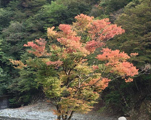 紅葉が始まってまちた!_c0110361_15511294.jpg