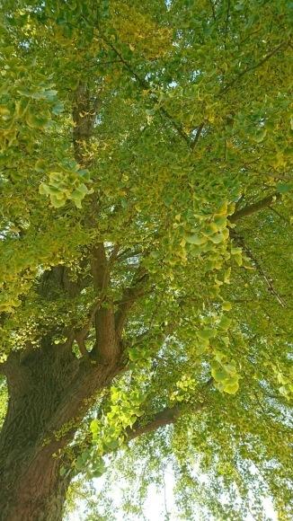 樹齢100年越え_a0088668_21031141.jpg