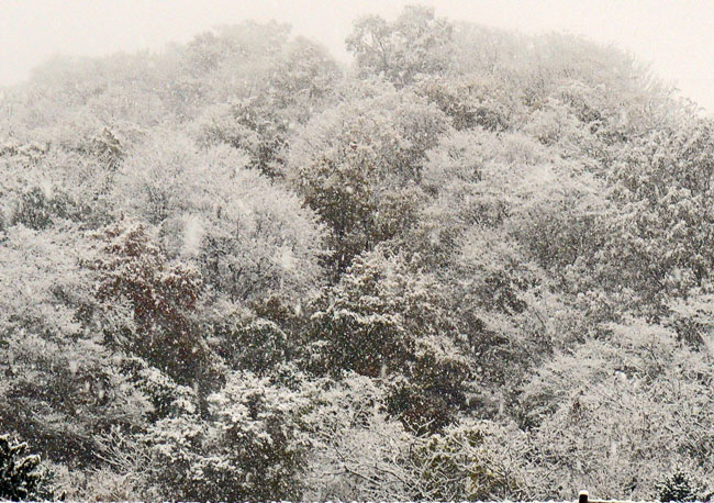 11月の雪景色_d0162994_8382252.jpg
