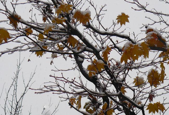 11月の雪景色_d0162994_8385432.jpg