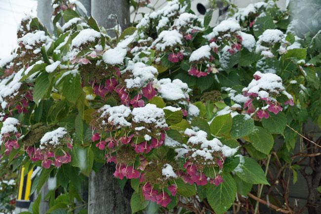 11月の雪景色_d0162994_8391961.jpg