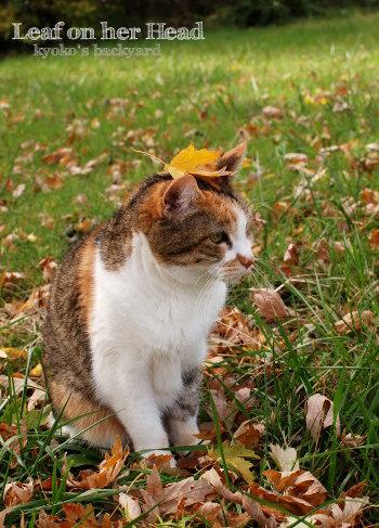 落ち葉を頭にのせて_b0253205_10085444.jpg