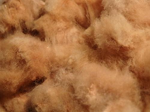 綿の収穫_e0221708_23554927.jpg