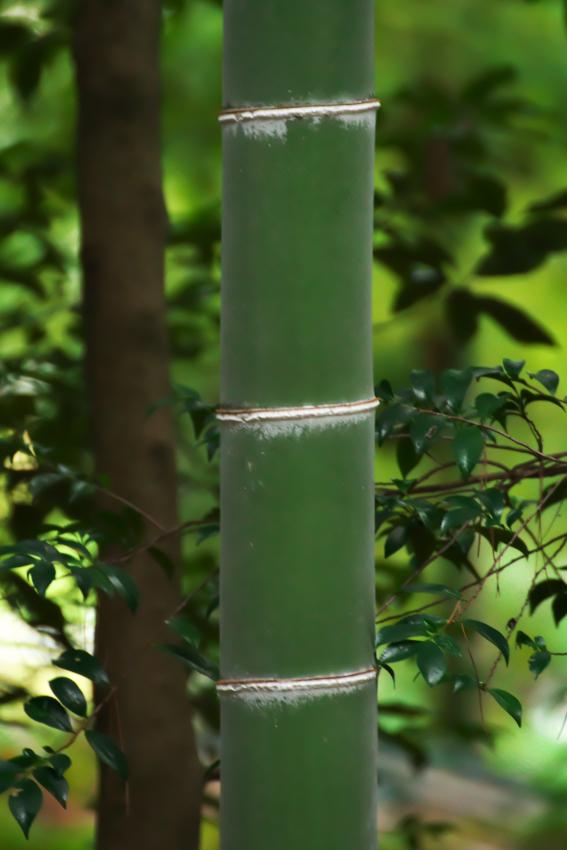 国営武蔵丘陵森林公園の紅葉と赤蕎麦の花1_a0263109_20520317.jpg