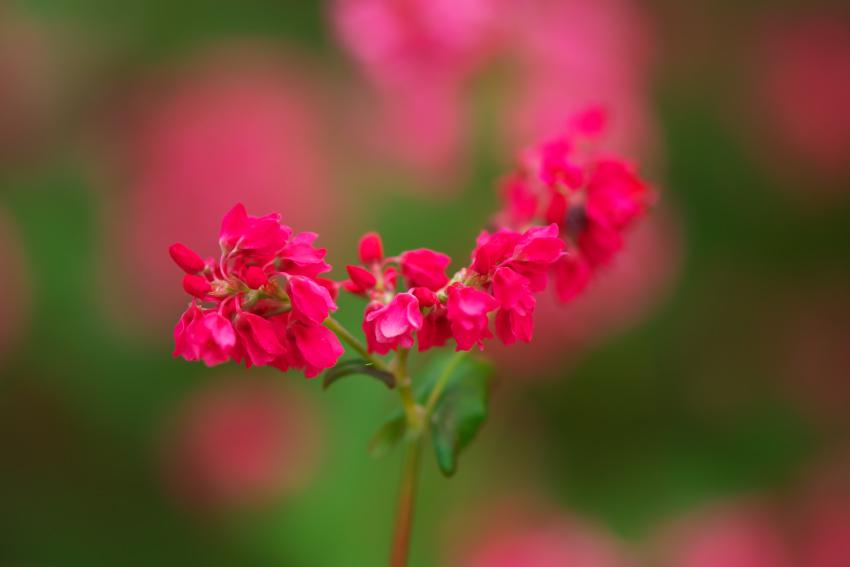 国営武蔵丘陵森林公園の紅葉と赤蕎麦の花1_a0263109_20543741.jpg