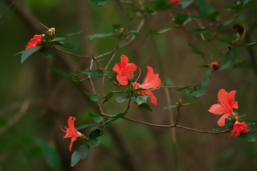国営武蔵丘陵森林公園の紅葉と赤蕎麦の花1_a0263109_20543979.jpg