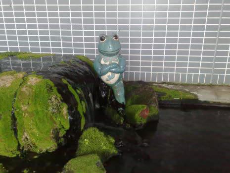 潮来市でみつけた蛙              |(株)アラキ工務店_e0360016_17273163.jpg