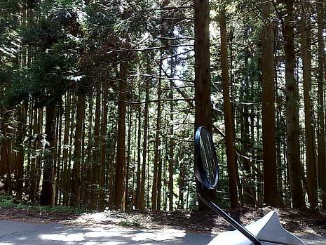 台風被害と林業の衰退              |アラキ工務店_e0360016_17275134.jpg