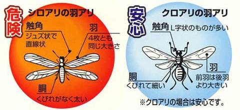 白蟻被害と問題点_e0360016_17302805.jpg