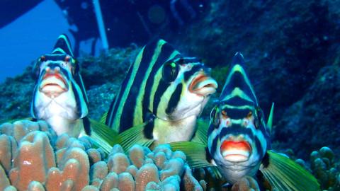 イカの産卵_e0360016_17311124.jpg