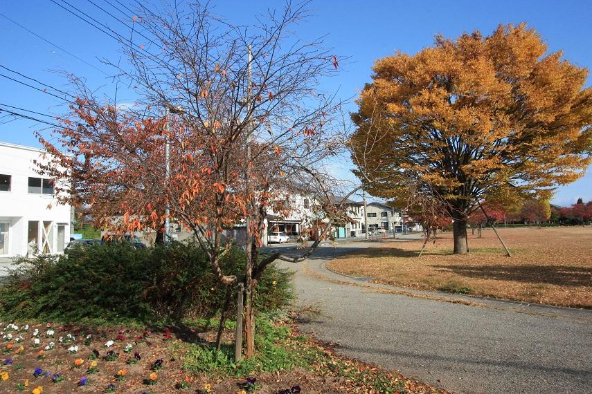 冬桜_c0097137_10491218.jpg
