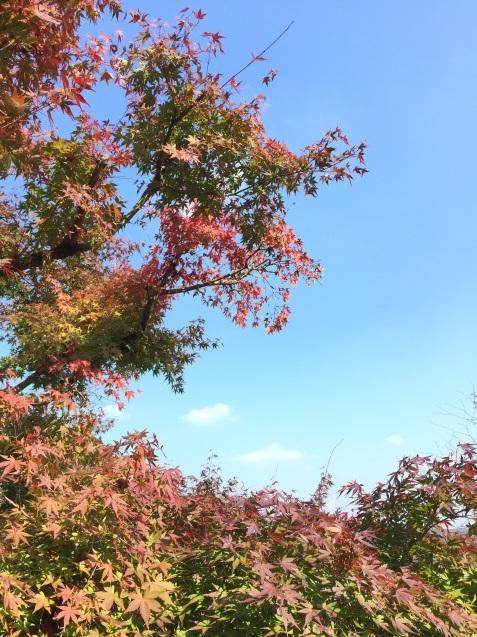 秋の神戸より #キューバ音楽 #マダムキキ #biolaboseeds_a0103940_13134592.jpg