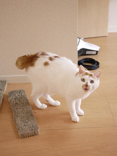 猫のお留守番 咲くん編。_a0143140_2371359.jpg