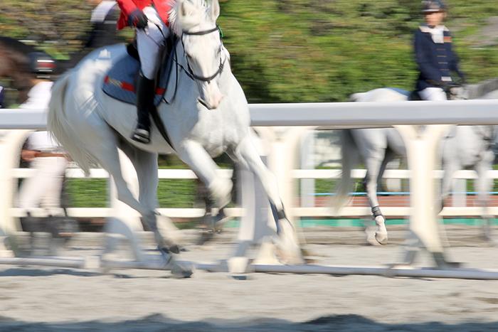 馬事公苑*競技馬_b0049843_14142044.jpg