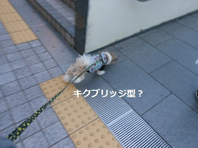 c0261346_20000468.jpg