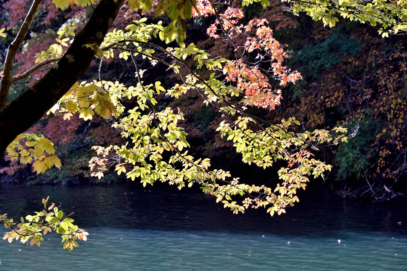 長老湖 11/4日撮影_b0223668_903598.jpg