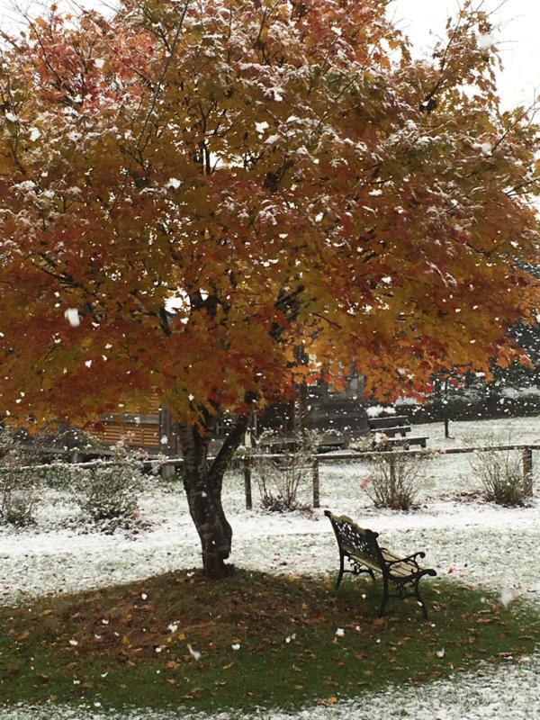 雪*雪*雪(・・;)_d0214172_09050590.jpg
