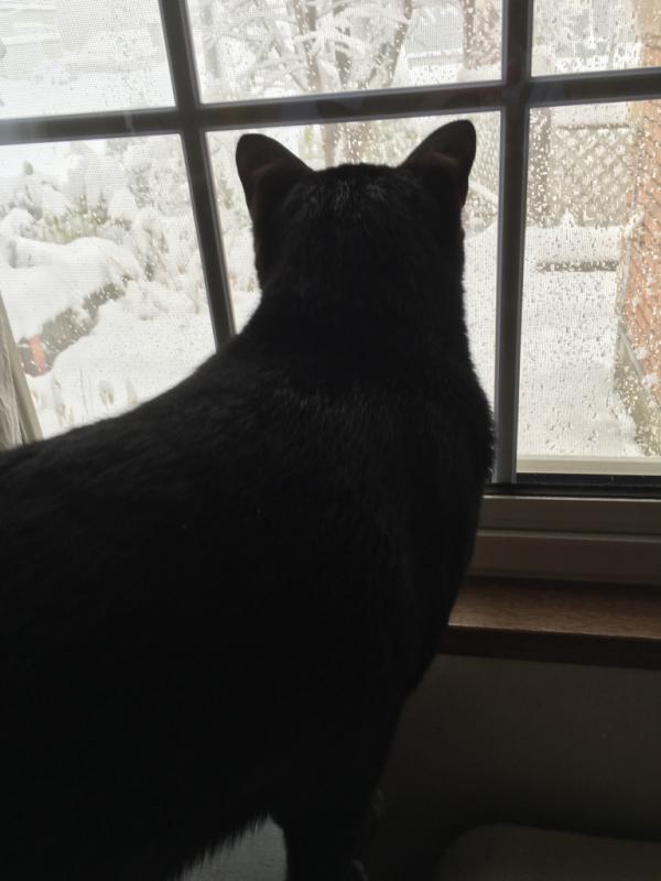 雪*雪*雪(・・;)_d0214172_09050735.jpg