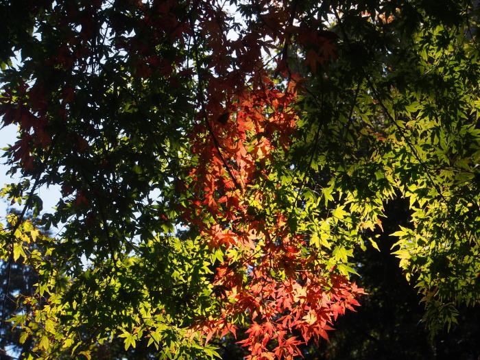 高尾山。_c0197578_854463.jpg