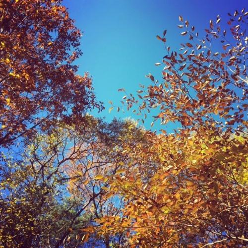 10年目の秋の日のこと。_d0028589_11342364.jpg