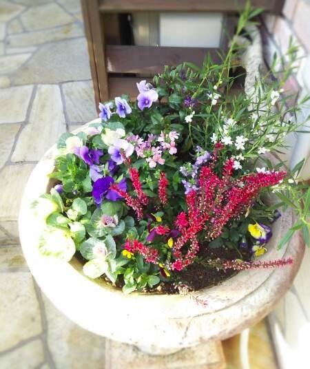 秋冬用の花、入れ替え終了_f0116297_11024058.jpg