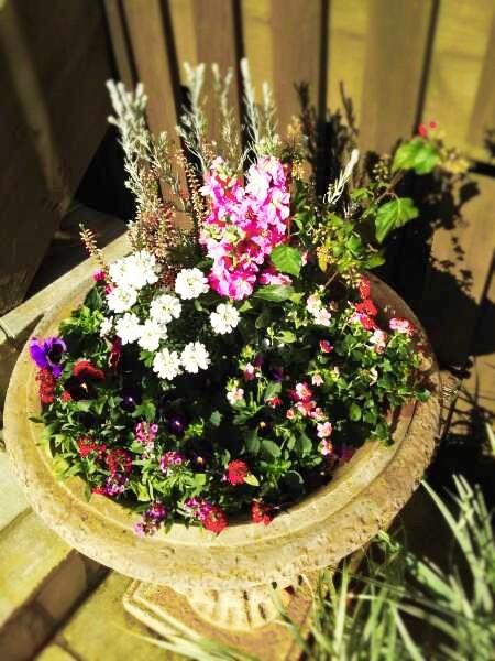 秋冬用の花、入れ替え終了_f0116297_11030859.jpg
