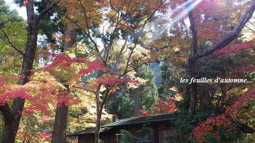 深まる秋。晩秋の渓谷・・・☆_c0098807_21403422.jpg