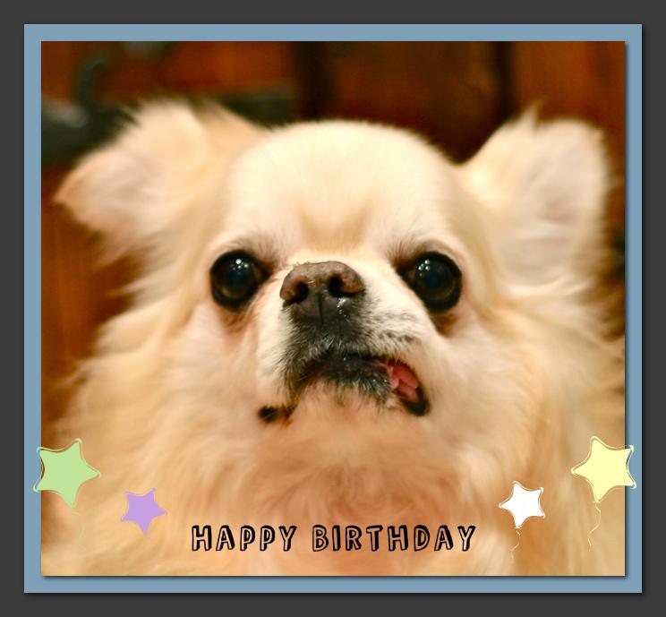 Happy Birthday♡セラくん & トリミングのお友達♫_d0060413_18551544.jpg