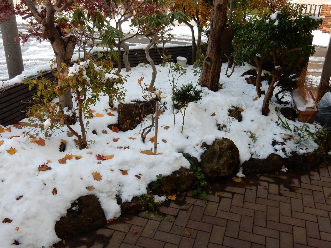 今日は降らず積雪深は10センチダウン_c0025115_22103155.jpg