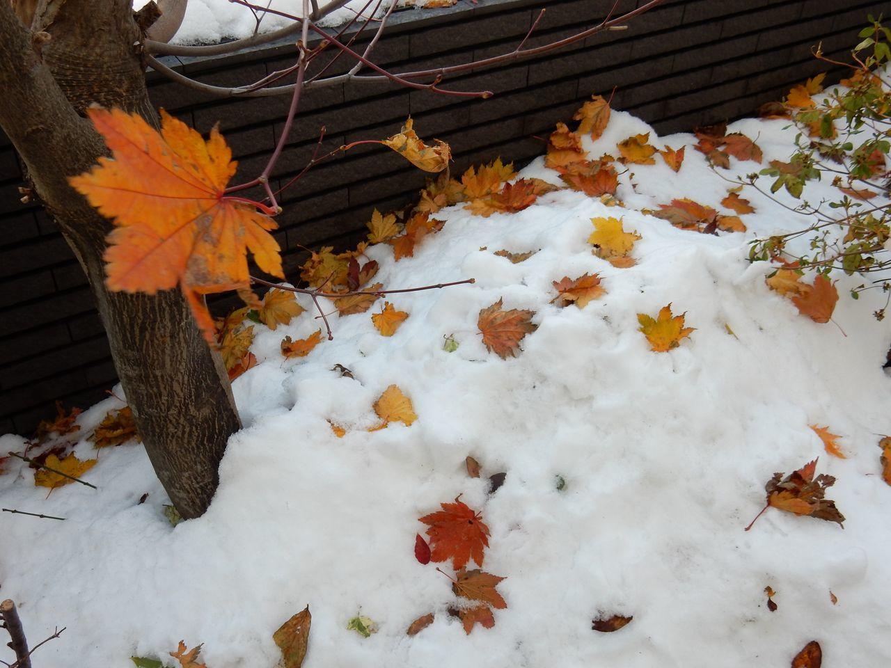 今日は降らず積雪深は10センチダウン_c0025115_22103767.jpg